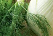 برای تنظیم قاعدگی این گیاه بسیار مفید است