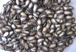 معجزات روغن دانههای هندوانه برای پوست