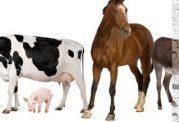 با حیواناتی که در زمینه پزشکی آگاهی دارند آشنا شوید