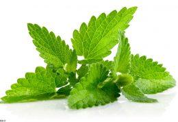 مناسبترین گیاه برای کبد نعناست