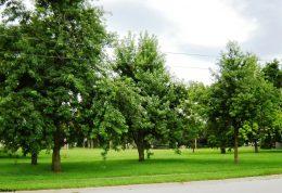 پناه بردن به فضای سبز برای درمان زوال عقل