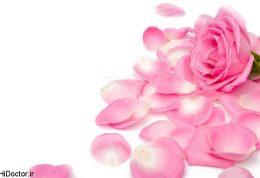 گلبرگ رز برای زیبا شدن چه خاصیتی دارد