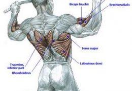يک نمونه تمرين دايرهای با استفاده از وزن بدن