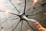سوئیچ کنترل اندازه  قند خون درمغز و ارتباط آن با دیابت نوع 1 و 2
