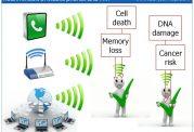 مضرات تلفن همراه برای دیگر عضو حیاتی  بدن