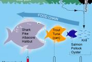 مراقب جیوه درون ماهی ها باشید