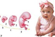شکل گیری شخصیت جنین با احساسات و حالات مادر