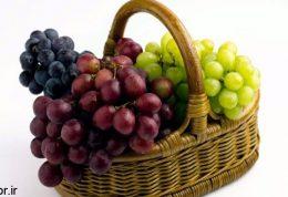 زنده باد انگور!