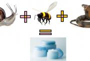 درمان بیماریهای لاعلاج با زهر زنبور عسل، مار و عقرب