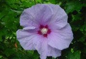 کاهش سطح قند خون با این گیاه مفید