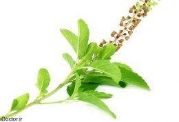 برای سلامتی بیشتر خانواده اسانس های گیاهی چه فوایدی دارند