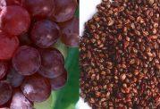 اهمیت له شدن هسته انگور زیر دندان