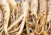 زیاده روی در مصرف گیاه پرخاصیت جین سینگ