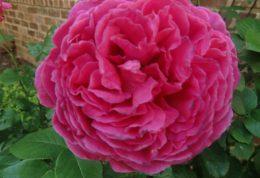 رابطه بوییدن گلهای خوشبو با اعصاب