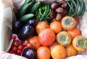 ویژگیهای برخی میوههای نوبرانه پاییزی