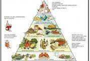 مهمترین مواد خوراکی برای سلامت شما