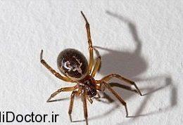 عنکبوت وحشتناک و مختل کردن زندگی قربانیان
