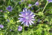 عکس های گل و گیاه کاسنی