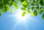 راز عدم سوختگی گیاهان در برابر آفتاب چیست؟