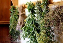 لیست آرامش بخش ترین گیاهان دنیا