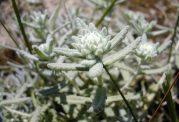 موارد استفاده از گیاه کلپوره