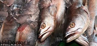 منشا بوی ماهی از کجاست