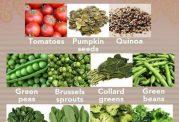 کاهش آهن در رژیم گیاهخواری و رفع آن