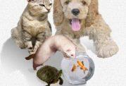نگهداری این حیوانات و تهدید به این امراض