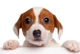 چگونه از سگ نترسیم
