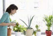 سبز شوید:  فایده های نگهداری گیاهان در منزل