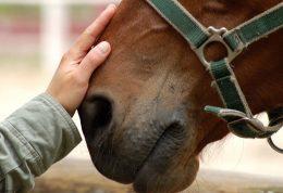 اطلاعاتی راجع به درمان بیماری ها با اسب