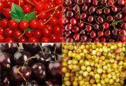 بررسی میوه گیلاس و خواص آن