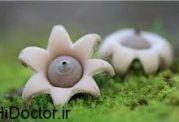 گلچینی از زیباترین و رویایی ترین قارچ های دنیا