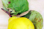 با میوه به چه غذاهایی می توان درست کرد؟