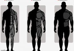 رشد عضلات در آکتومورف ها