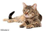 برای اینکه گربه خود را سالم نگه دارید این موارد را بدانید