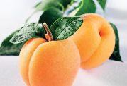 آشنایی با زردآلو و هسته این میوه