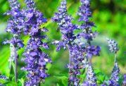 گیاهان گلدار باغچه و قابلیت درمانی آنها