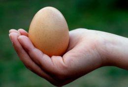 15 شیوه استفاده از تخم مرغ برای پوست و مو