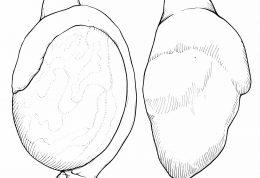 اقدامات اورژانسی برای اندام تناسلی مردانه