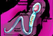 پرسش هایی رایج درباره ناباروری و تحلیل رفتن اسپرم