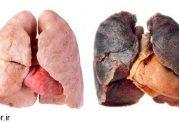 پاک کننده طبیعی نیکوتین و کاهش ابتلا به سرطان