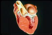 ضربان قلب در ورزشکاران