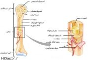 تقسیم بندی انواع استخوان بر اساس جنس