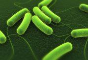 آیا مصرف پروبیوتیک شما بیش از حد است؟