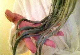 شیوه های خلاص شدن از سبز شدن موها در استخر