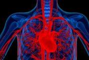 میان ضربان قلب، ورزش، و سن  چه ارتباطی وجود دارد؟