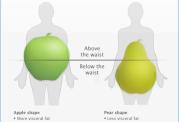 نوع شکل بدن و رژیم مربوط به هرکدام
