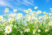 چرا در فصل بهار گاهی بی حال می شویم