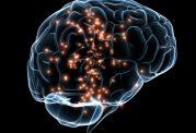 رابطه مغز بزرگ با افزایش عمر